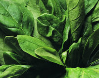 spinach leaves image